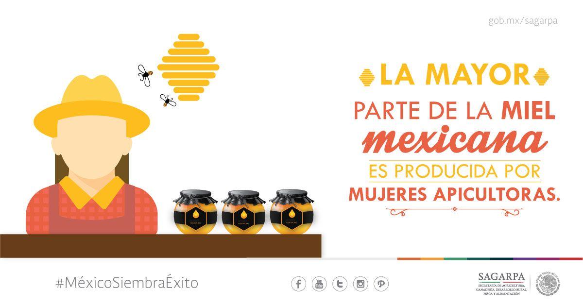 La mayor parte de miel mexicana es producida por mujeres apicolas.SAGARPA SAGARPAMX #MéxicoSiembraÉxito
