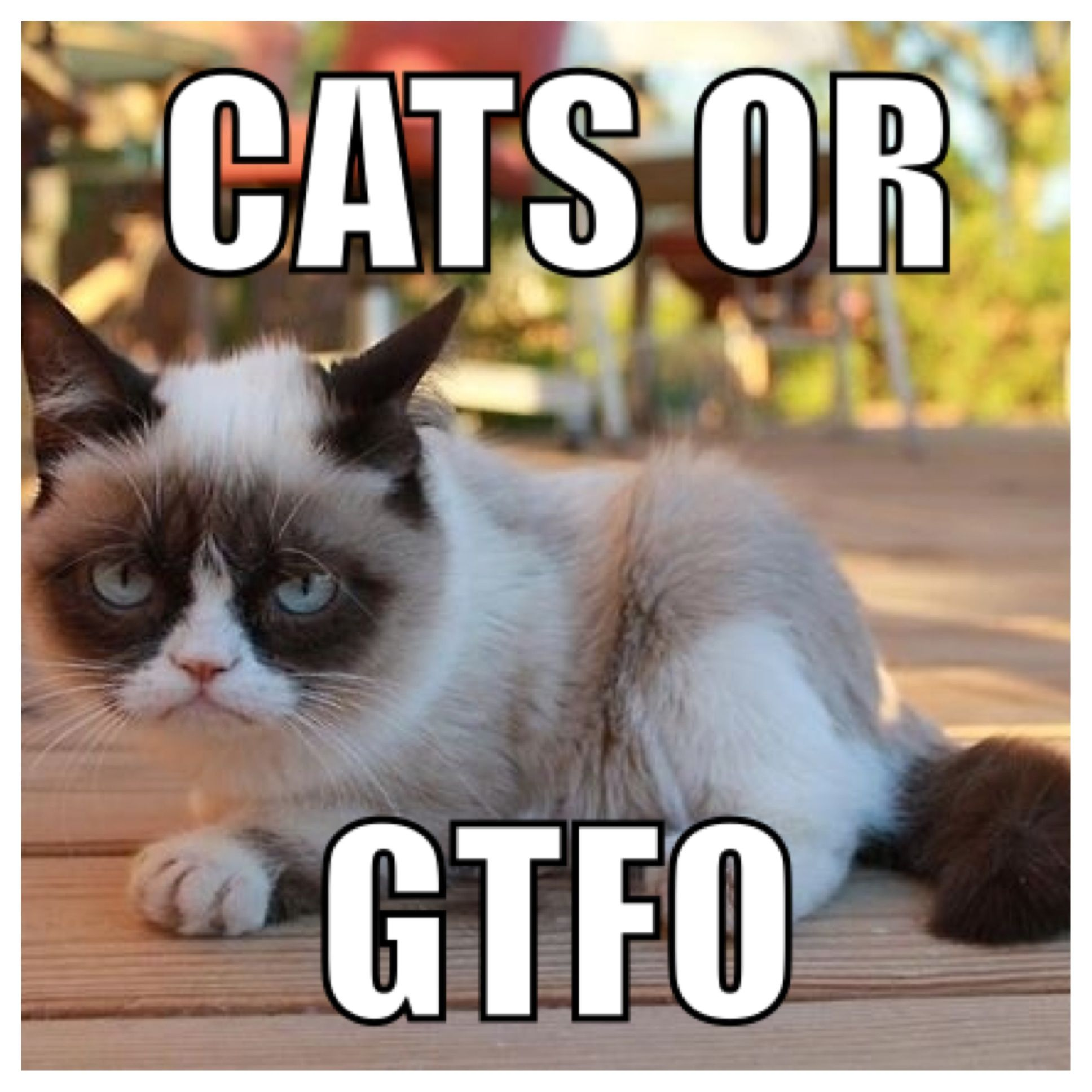 Cats or #GTFO