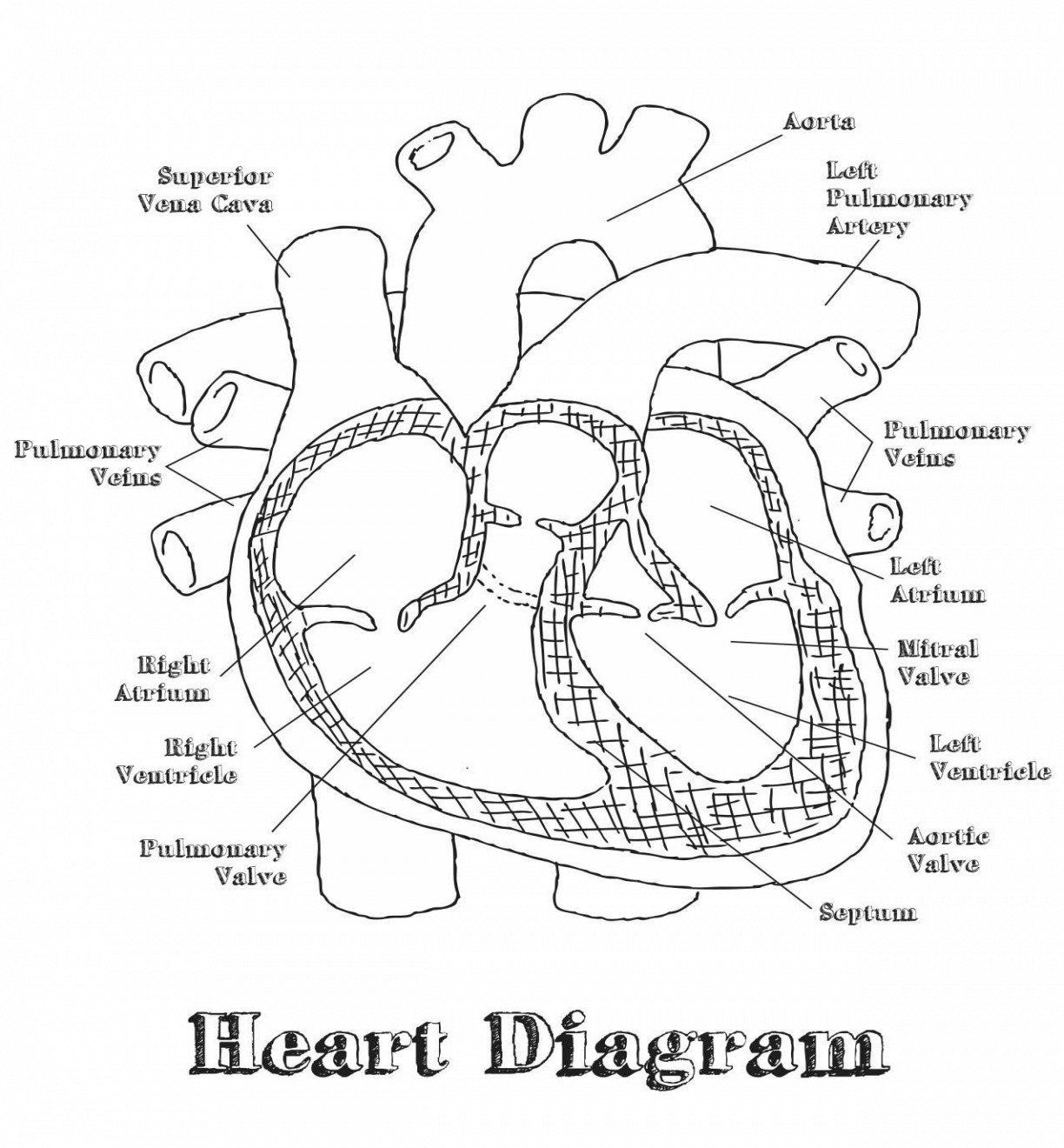 Human Heart Coloring Pages Best Of Anatomy Heart Coloring