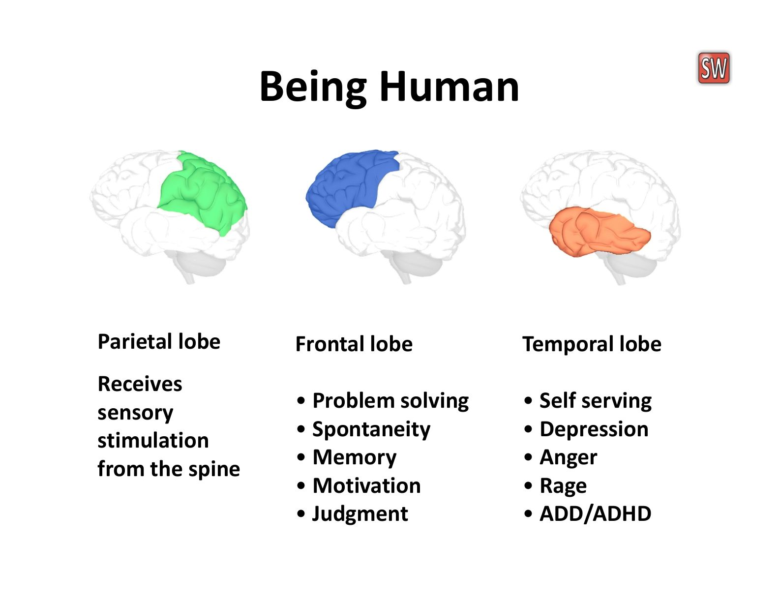 The frontal lobes are the seat of control, receiving ...