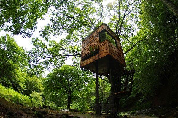 Casa na árvore por Takashi Kobayashi (Japão)
