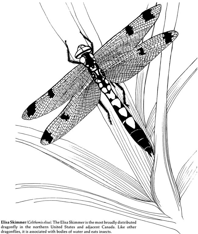 Insects Coloring Book Dover Publications Malen Malvorlagen