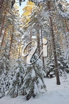 iPHOTOS.com - Stock Photo of a Sunny Winter Landscape #photo #photography #winter