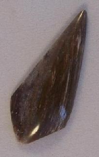 FREE S - Cabochon - Unique Outstanding Petrified Wood Designer - A JewelryArtistry Original - GC41