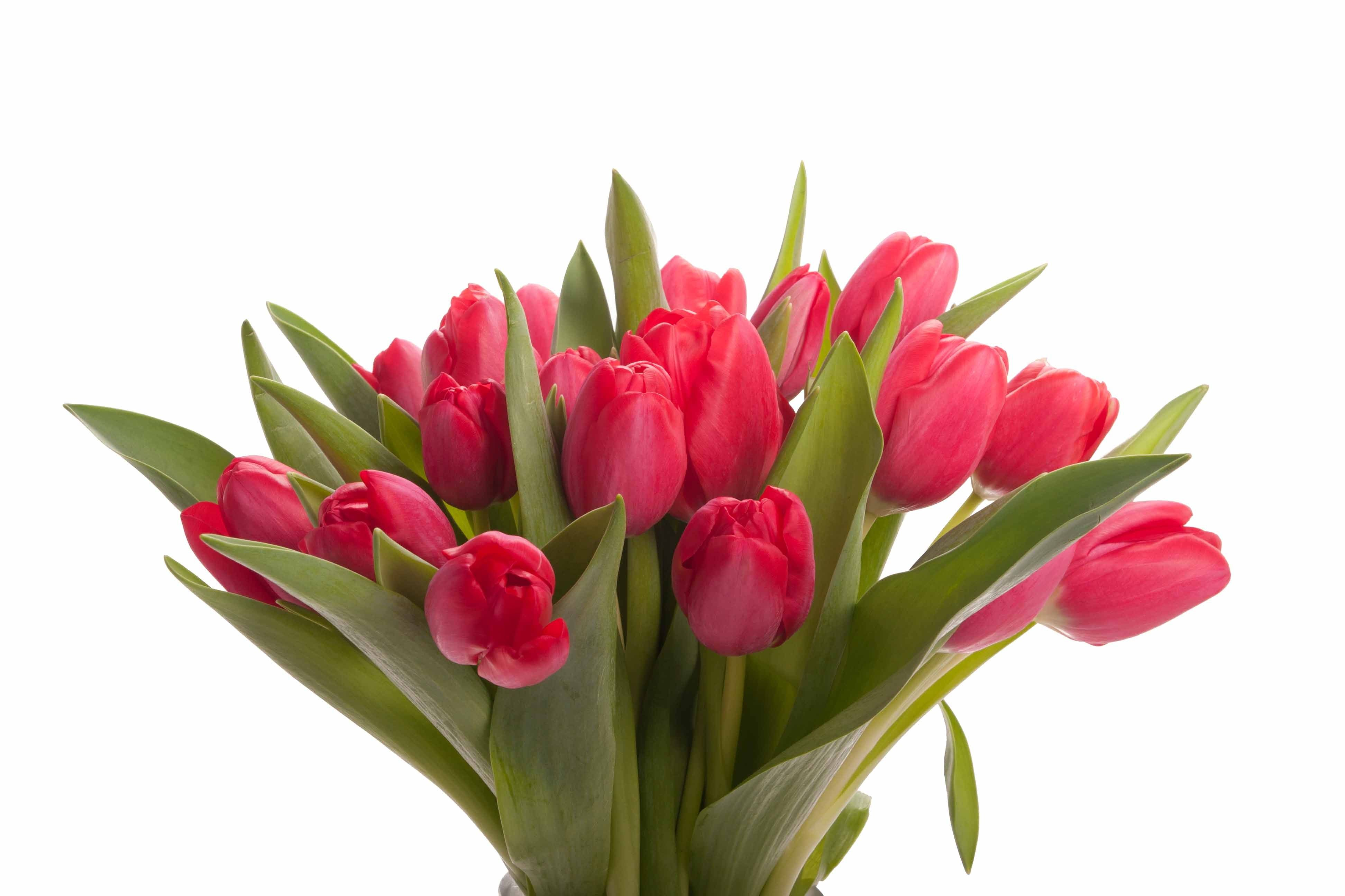Red Tulip Bouquet - Tulip Bouquets - Gifts