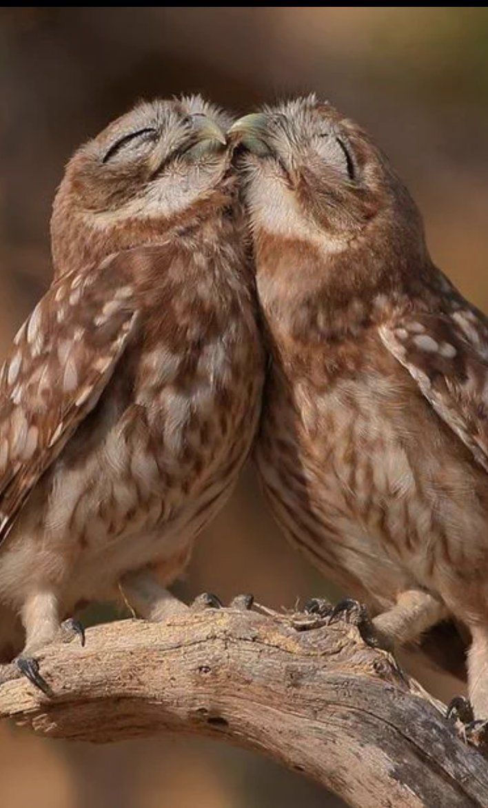 Pin by Colleen Richards on Birds (With images) Owl, Wild