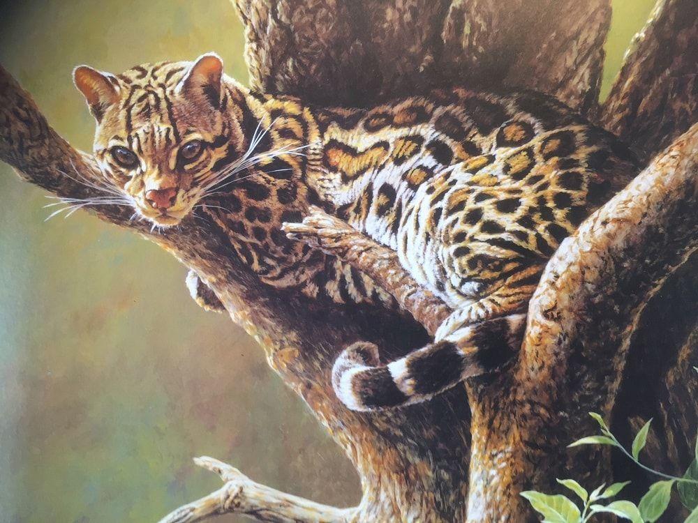 Original Margay Painting by Alan M Hunt Big Cat Wildlife