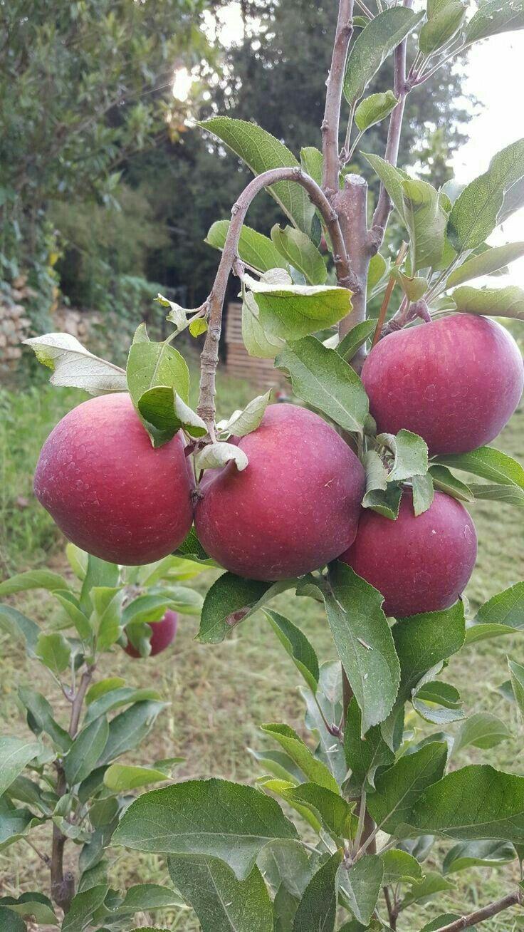 Cây ăn quả, Trái cây, Hoa