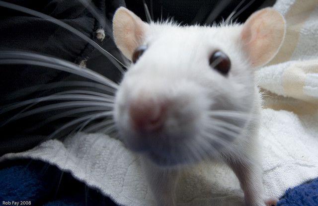 Whisker Sniff