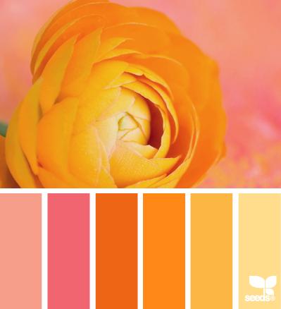 ranunculus orange. LOVE this color combo! For SU think Regal Rose, Melon Mambo, Tangerine Tango, Pumpkin, Daffodil Delight and So Saffron.