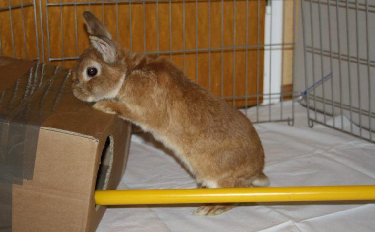 Beschaftigung Mit Kartons Kaninchen Hase Haustiere