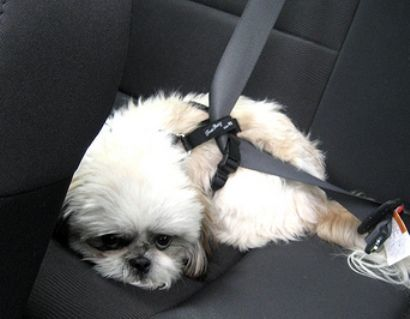 Scary Four Popular Dog Harness Brands Failed Crash Safety Tests