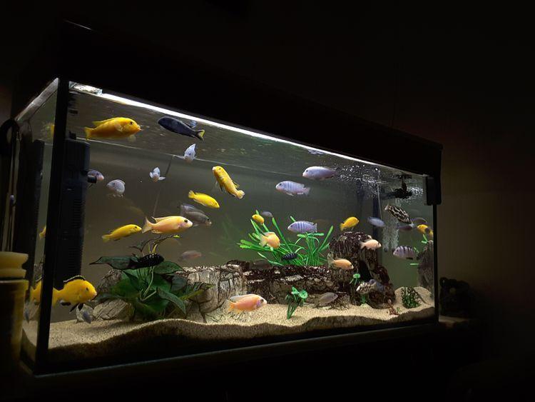 What Temperature Is Correct For Community Aquarium Mix Of Fish Fish Tank Decorations Fresh Water Fish Tank Fish Tank Lights