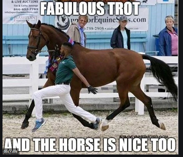 Horse Gurlz