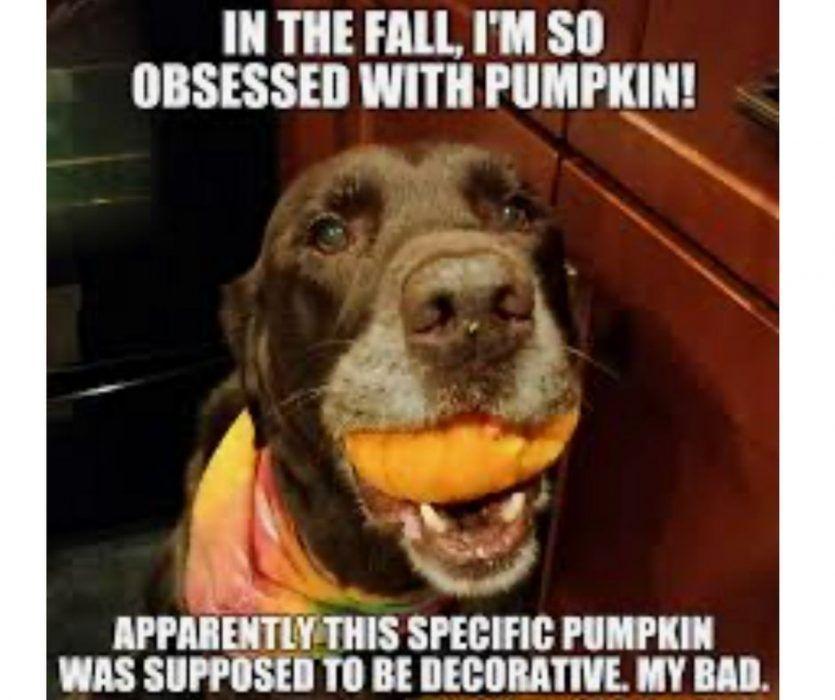 23 Autumn Equinox Memes Fall Memes Memes Funny Memes