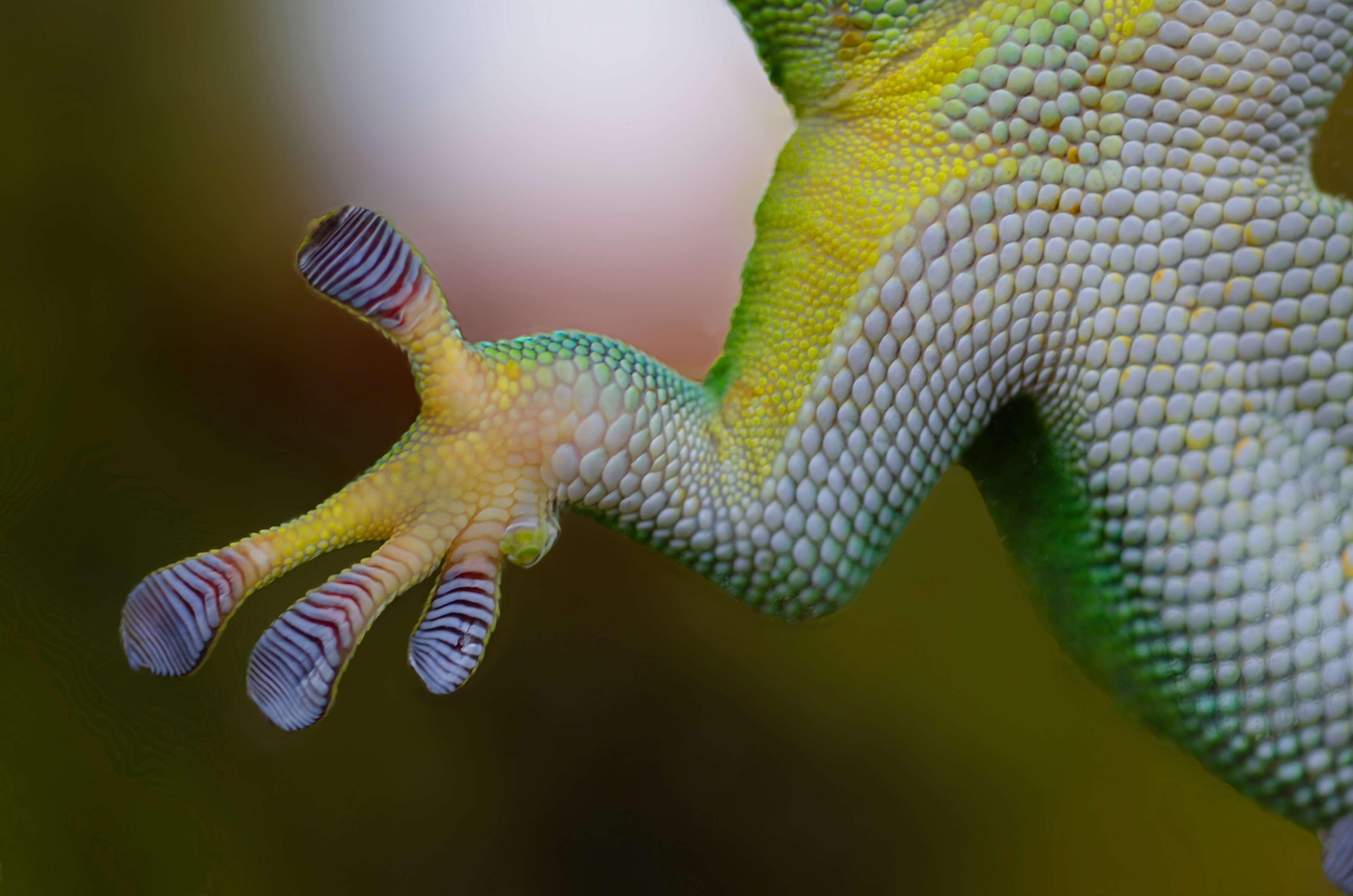animal glass glue glued green iguana lizard paw