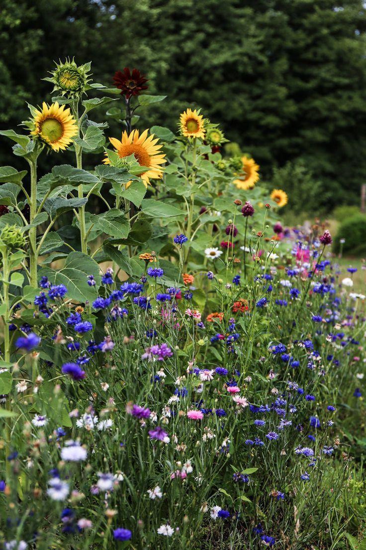 Photo of Wilde Blumen im Bauerngarten