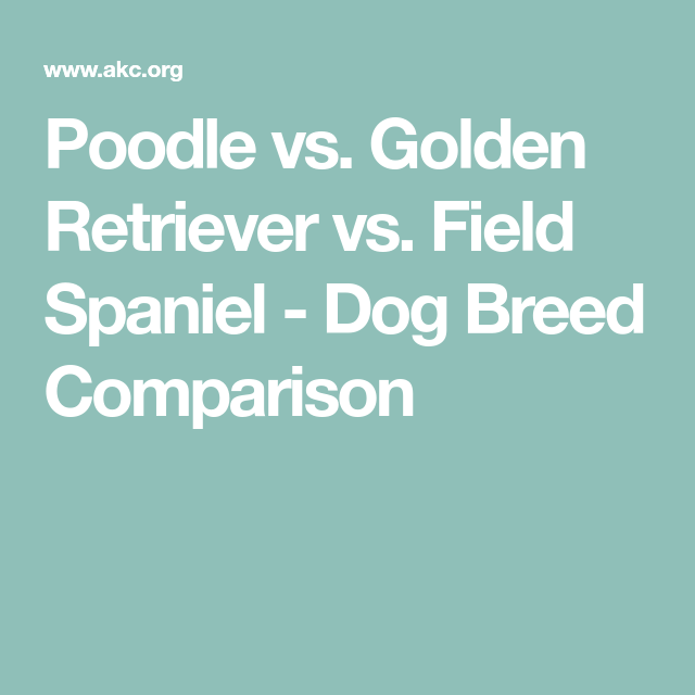 Poodle vs. Golden Retriever vs. Field Spaniel - Dog Breed Comparison