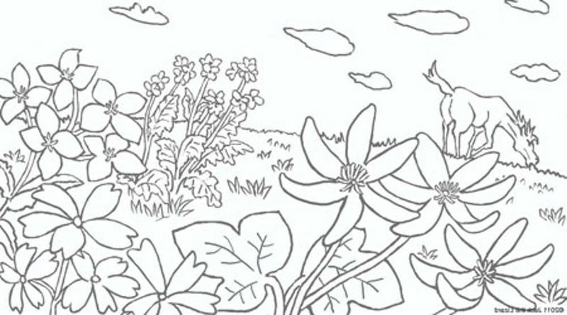 Rainbow And Flowers Coloring Pages In 2020 Printable Flower Coloring Pages Flower Coloring Pages Flower Printable
