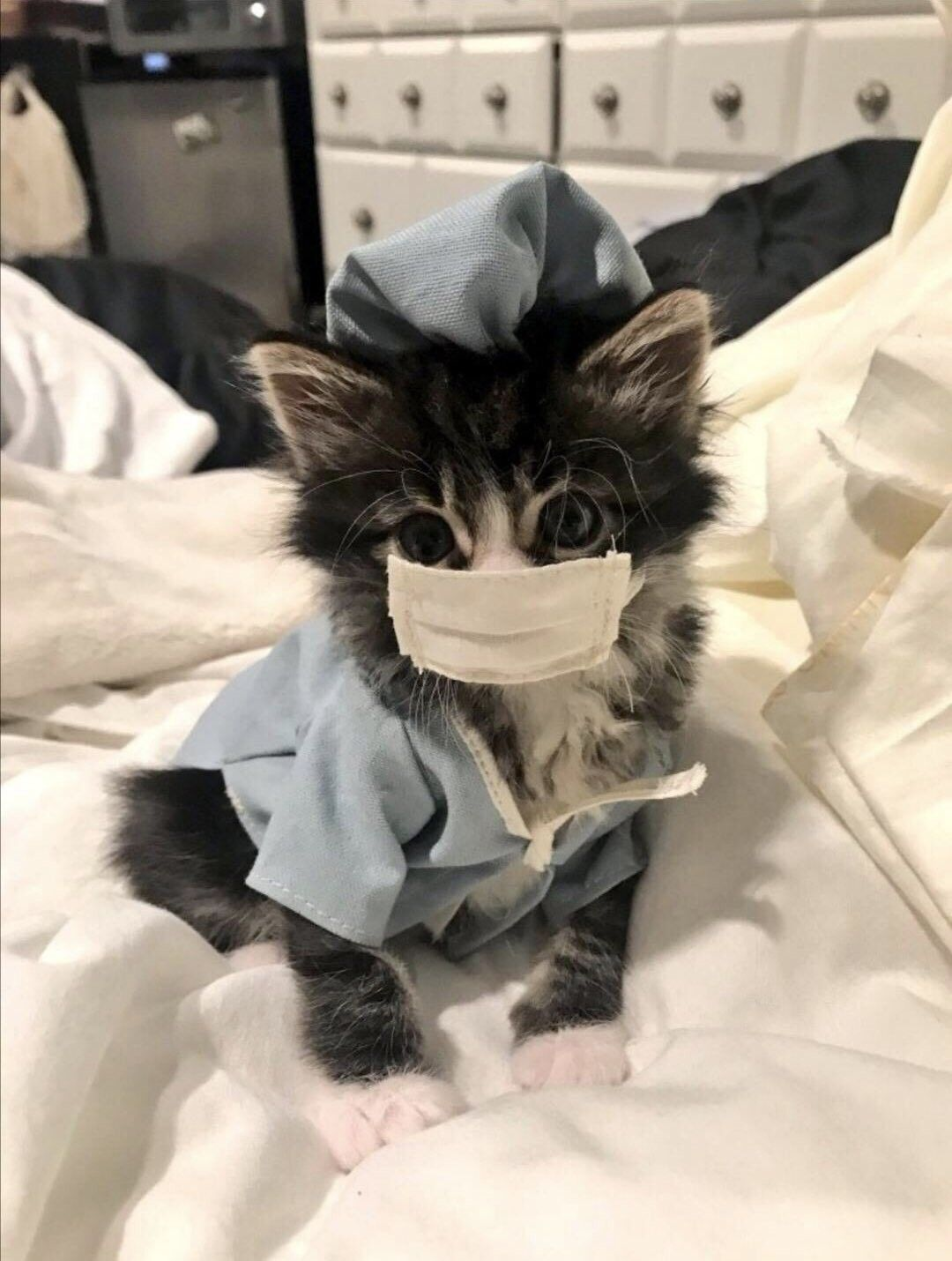 Pin By Aww Cats On Cats With Jobs In 2020 Cute Baby Animals Cute Animals Cute Funny Animals
