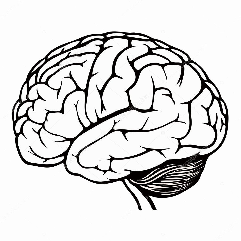 24 Human Brain Coloring Book In With Images