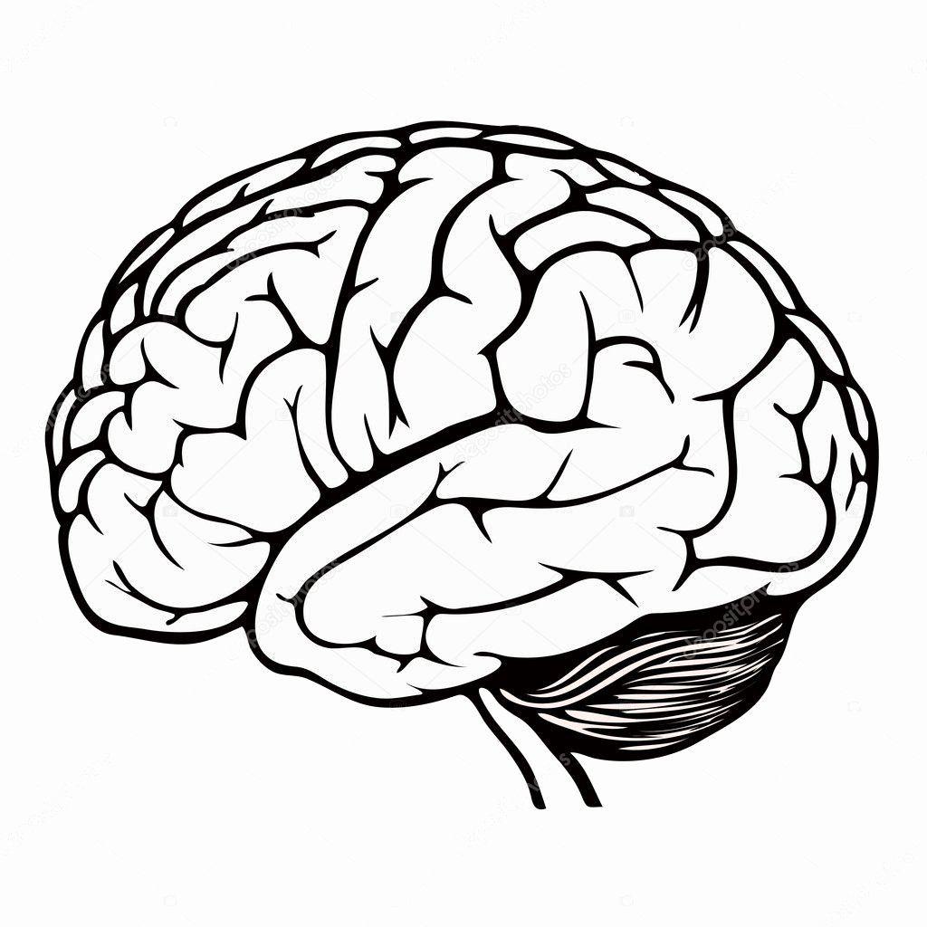 Human Brain Coloring Book Inspirational Human Brain Stock Vector C Spirit Alex Brain Drawing Brain Illustration Brain Art Drawing