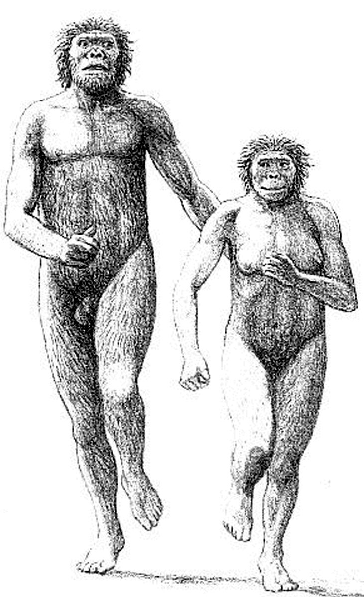 Sexual dimorphism in early humans