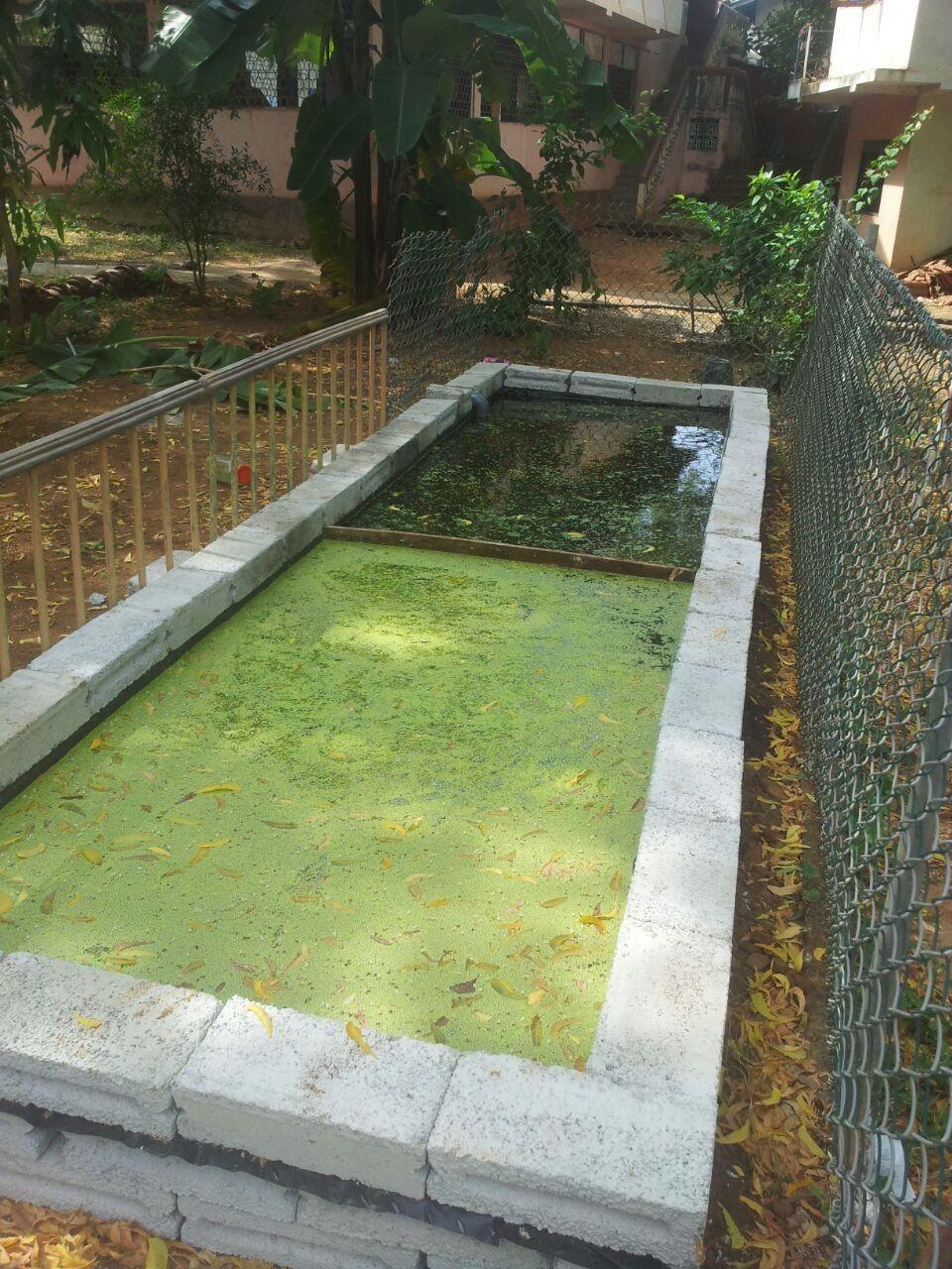 bioreactor prototype in melbourne florida duckweed growth