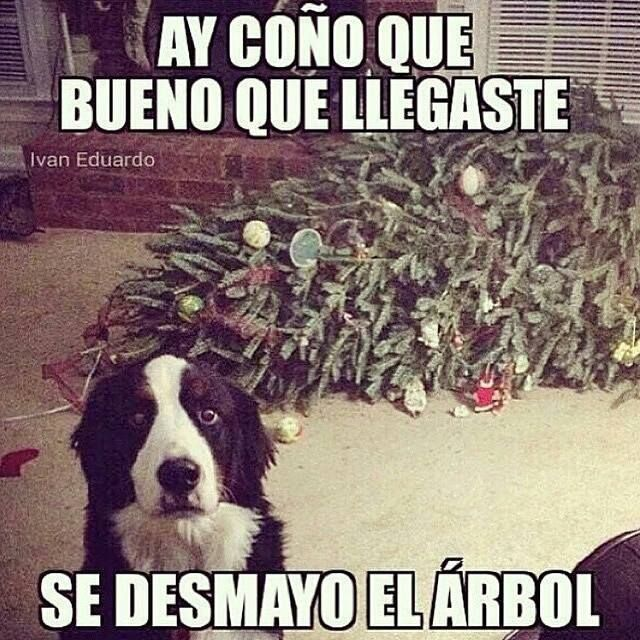 Recopilacion De Memes Parte Iv Yapa Christmas Memes Funny Animal Memes Funny Animal Memes
