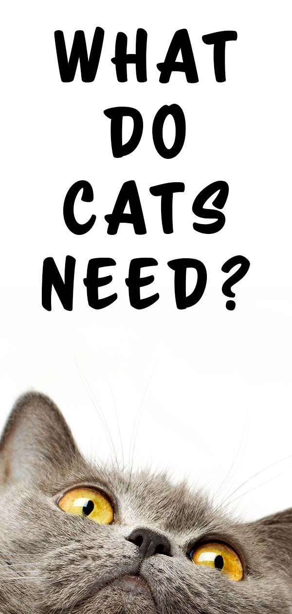 What Do Cats Need? Your Top 10 Kitty Essentials Cute
