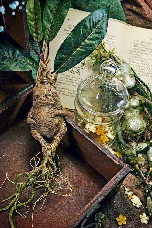 Herbology happy ginger