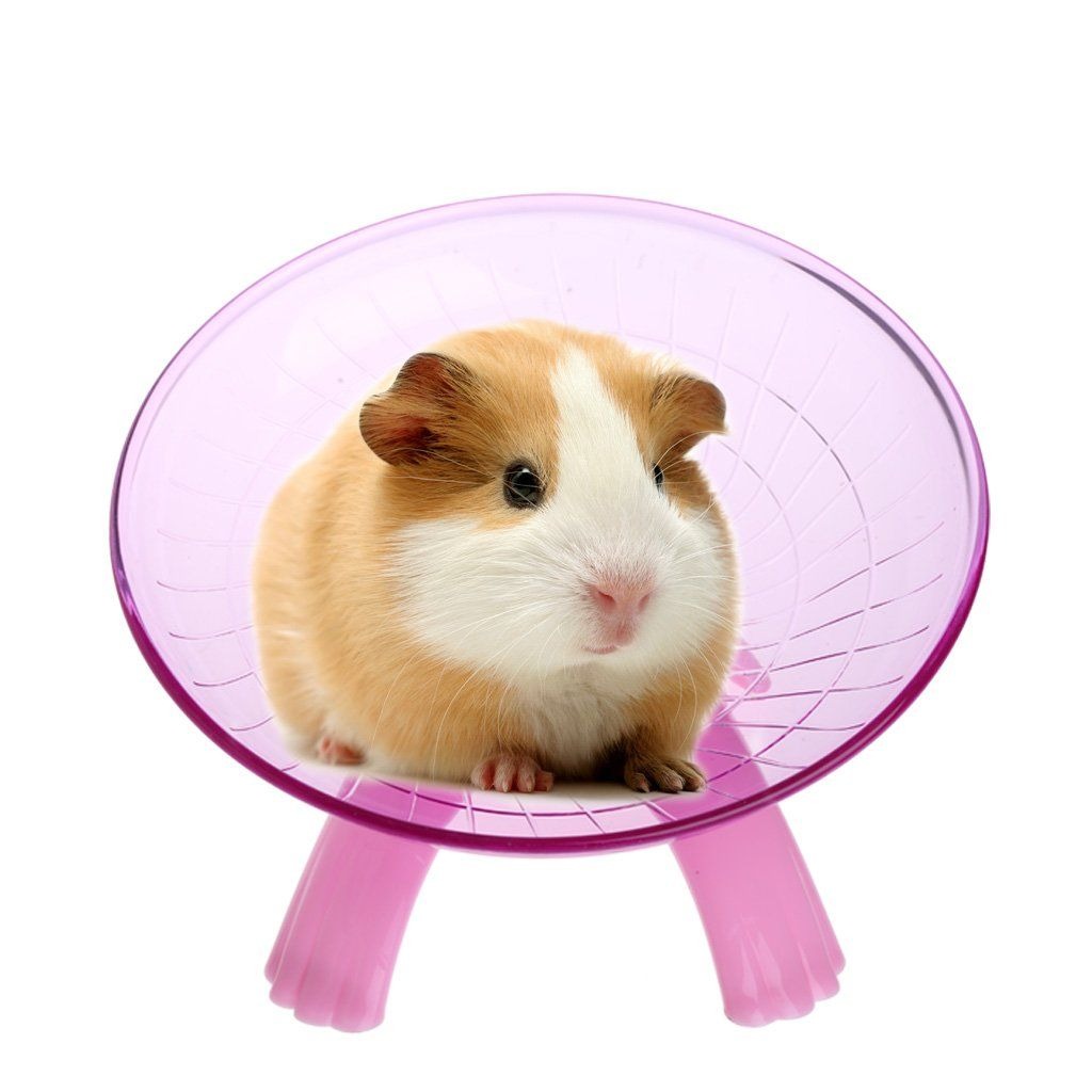 Running Disc Flying Saucer Exercise Wheel For Pets Mice Hamsters Gerbil Cage Toy For Additional Information Go To Photo Lin Pet Mice Hamster Exercise Wheel