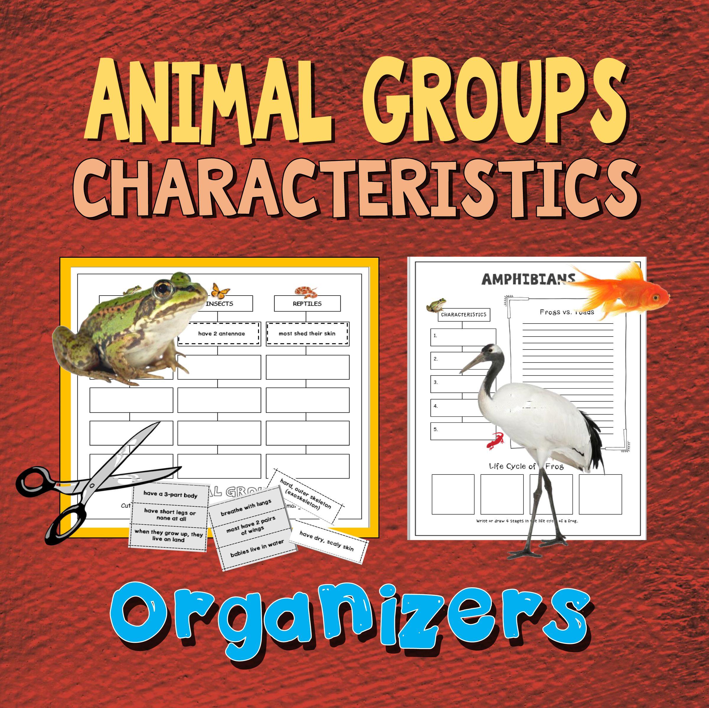 Animal Groups Characteristics