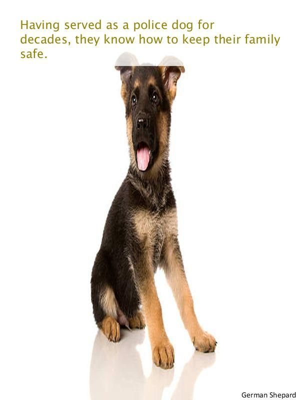 Find Out About Short Haired German Shepherd Puppy Short