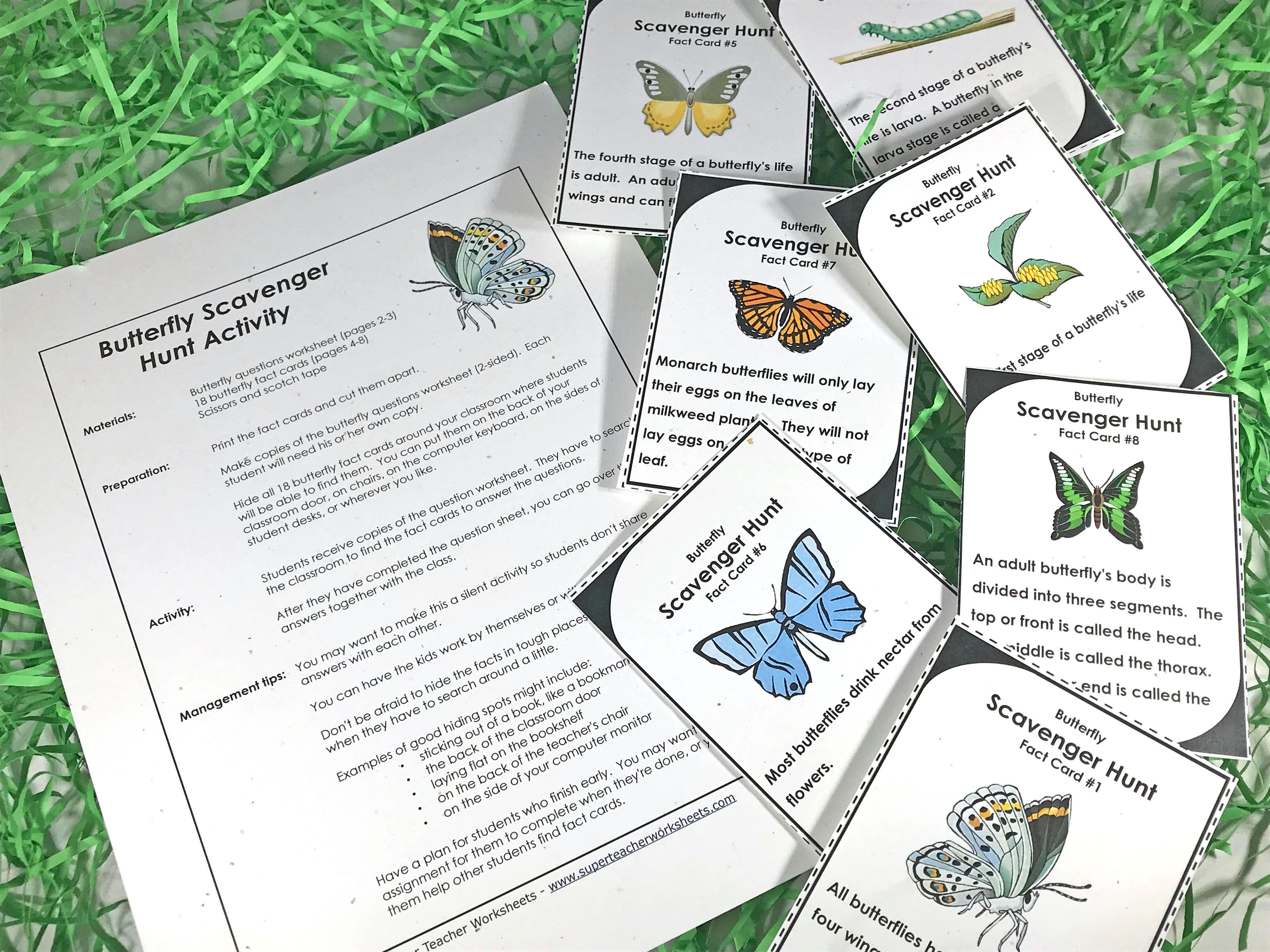 Inspire Your Students To Think Spring With Butterfly