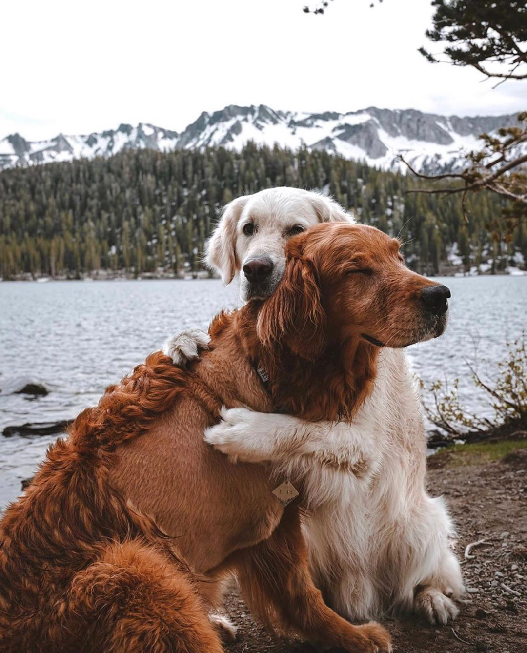 Photo B Cute Dogs And Puppies Puppies Dog Breeds