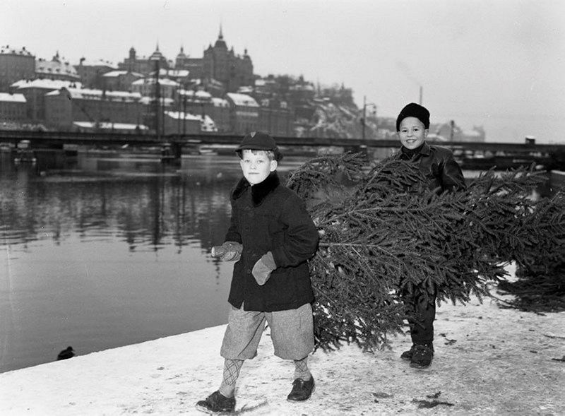 Hans Hertsjö and Lars Jansson earned extra Christmas pennies by wearing homes ordered trees from Kornhamnstorg. December 21, 1952 By John Kjellström SvD / Stockholmskällan