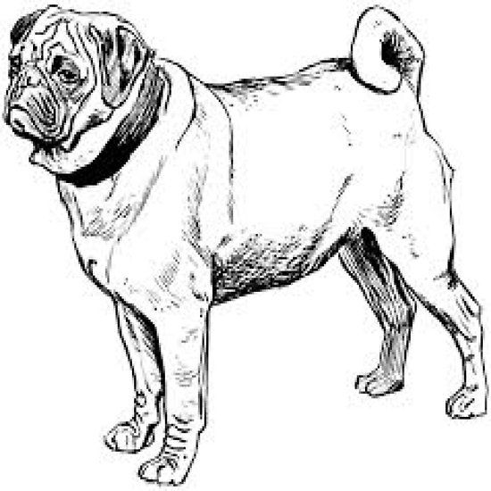Vintage Black And White Pug Black And White Pug Dog Coloring Page White Pug
