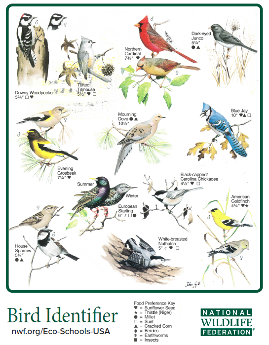 Bird Identifier Guide illustrated by John Sill - Eco-Schools USA - Bird Identifier Guide Illustrated By John Sill - Eco-Schools USA