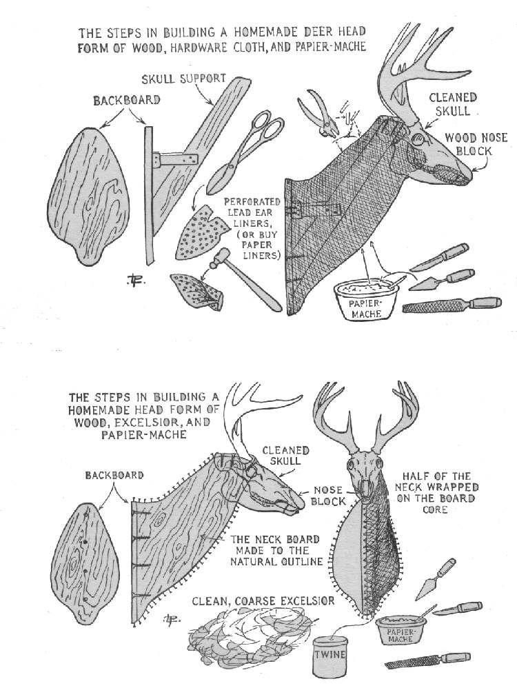Diagram Of A Deer Head Diy Enthusiasts Wiring Diagrams