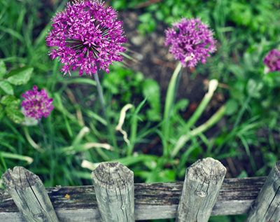 af19238187e6e9532c6d89c58537903e - Better Homes And Gardens Plants For Sale