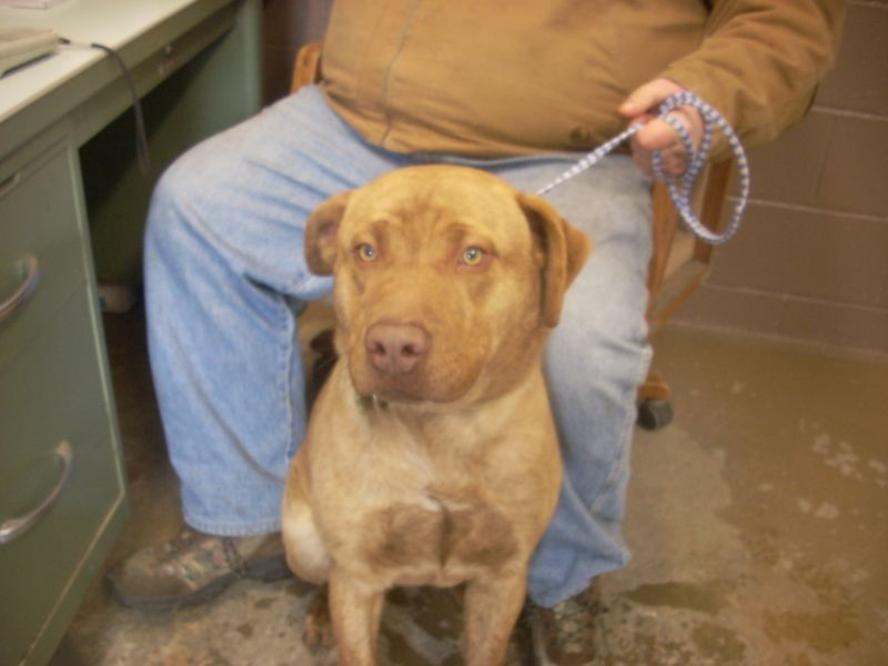 Adopt 4 Available 1 Yr On Petfinder Dog Pounds Dog Adoption Pet Adoption