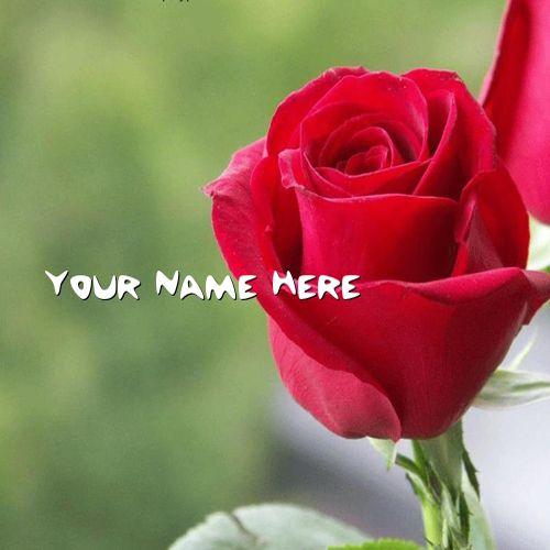 Get Your Name In Beautiful Style On Red Rose Picture. You
