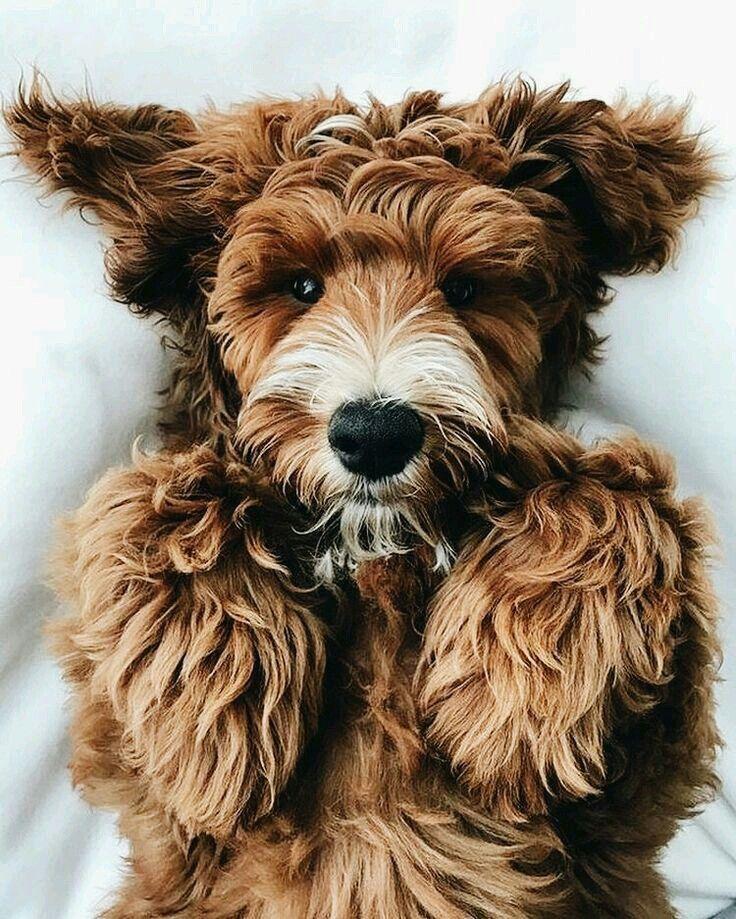 pinterest delaneyamwalker Cute dogs, Animals, Cute animals