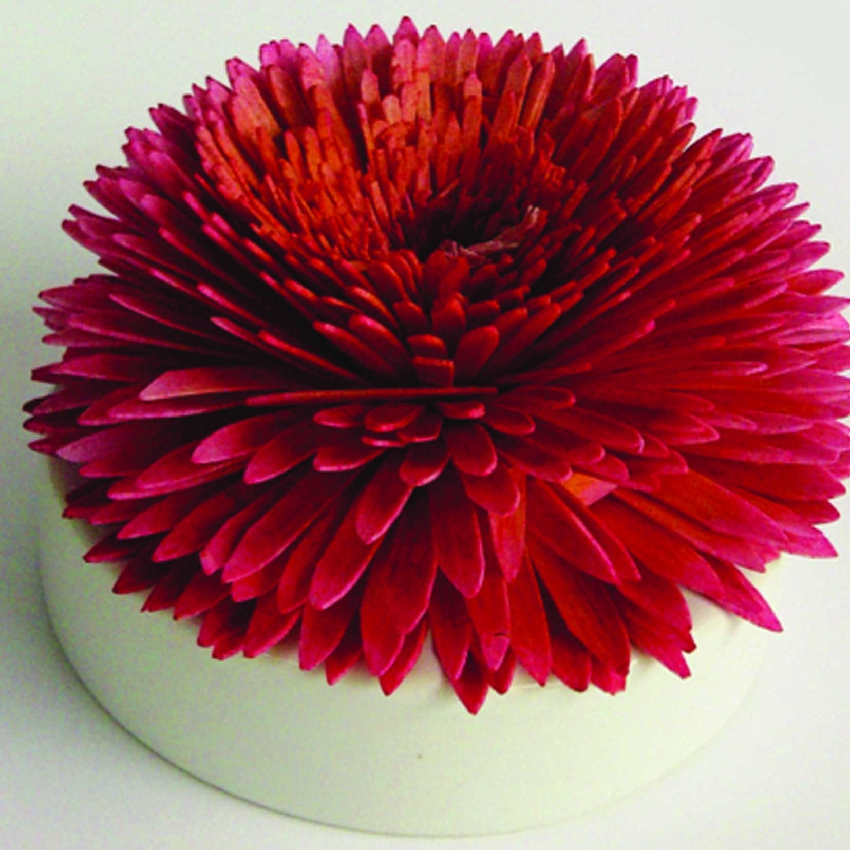 Colour changing blooming scent diffuser | Diffusers and Homewares online