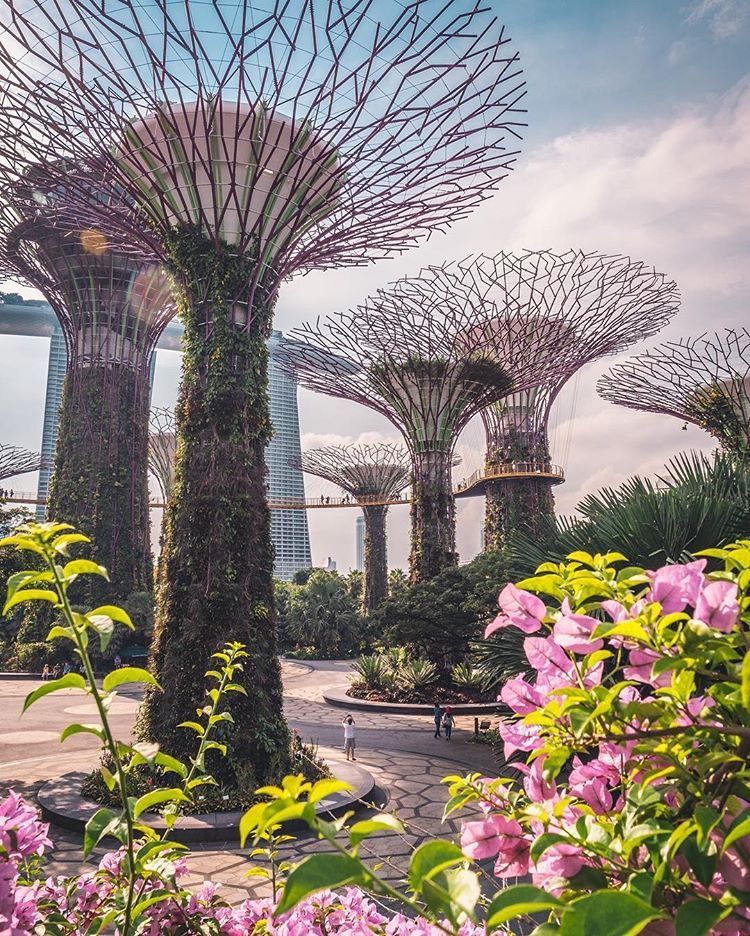 af1c1fa328eb55d3f6d83e320f0ca724 - Gardens By The Bay Valentine's Day
