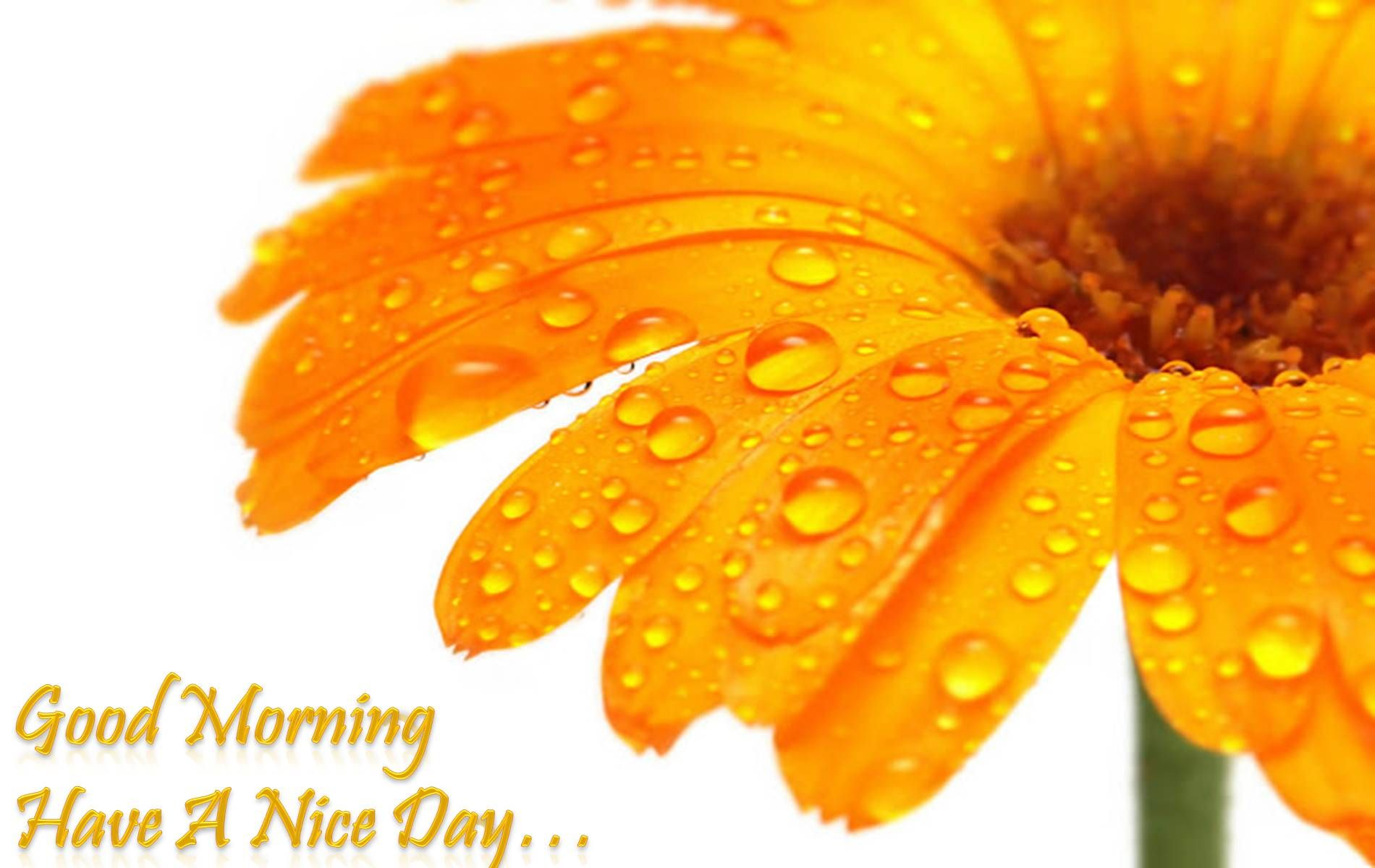 Preview Orange Flower Wallpaper  Pinterest