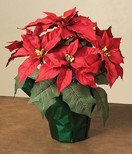 15 Potted Red Poinsettia Plant With 7 Flowers Visit The Image Link More Details Poinsettia Plant Christmas Flowers Poinsettia Flower
