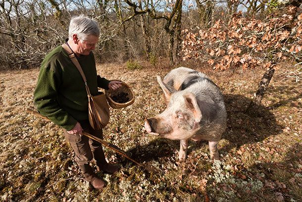 In Search For The Black Diamond Of Cookery Get Fresh Truffles At Quel Objet Http Www Quelobjet Com Black Perigord Winter Truff Truffle Hunting Truffles Pig