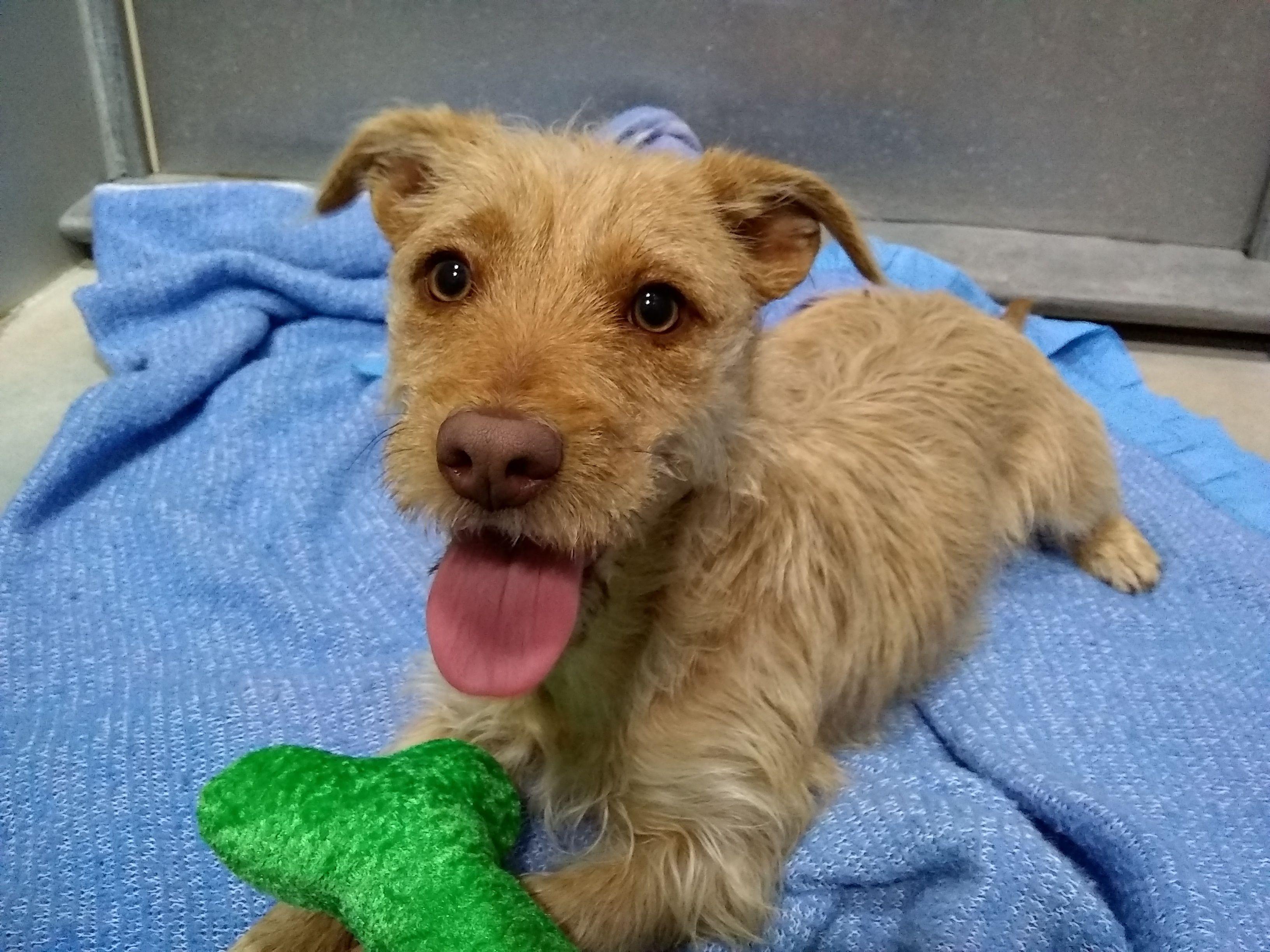 Adopt Tawny On Petfinder Dog Adoption Adoption Dogs
